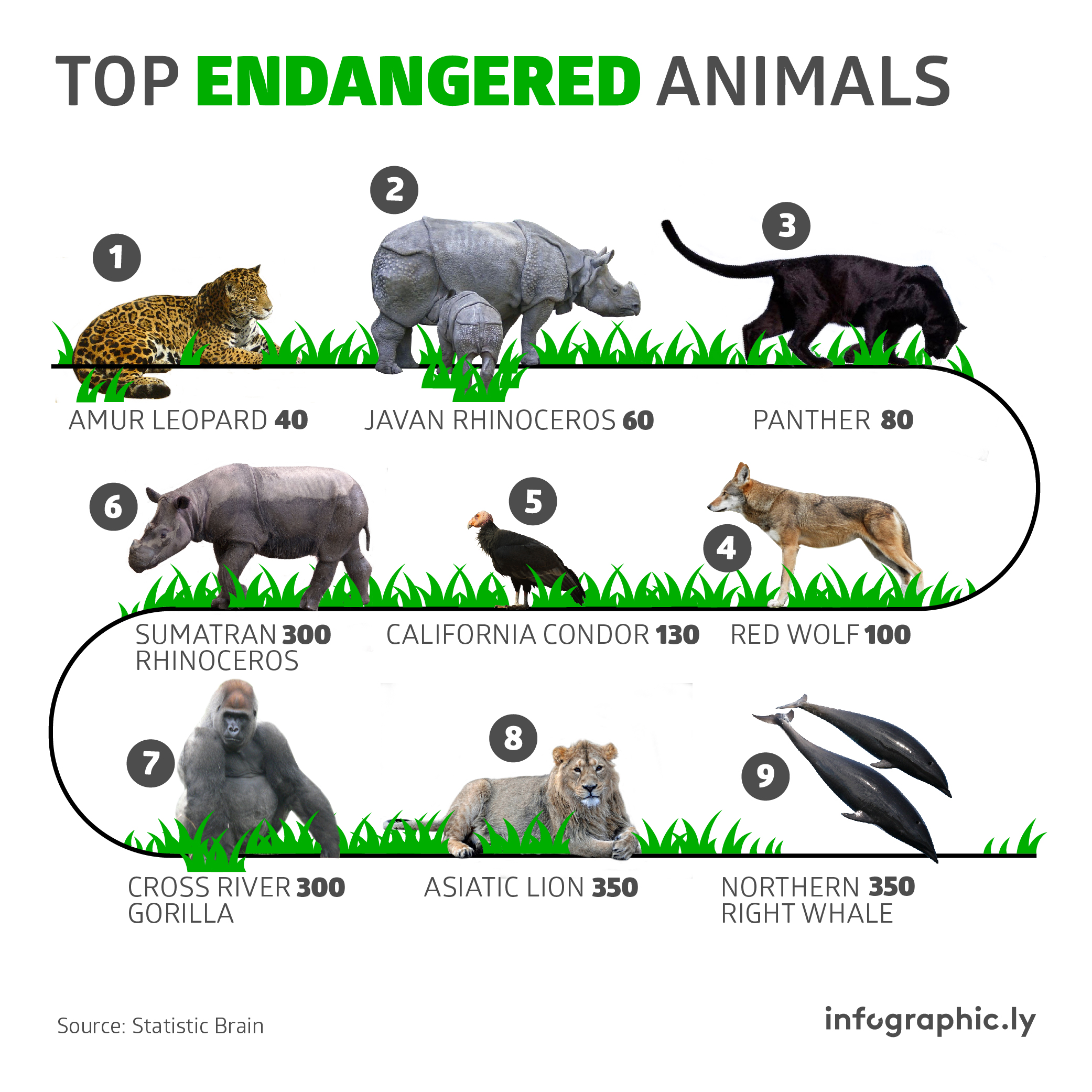 Endagered Animals 01 An Information Amp Infographic Design Agency